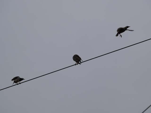 「鳥」2_e0096928_20155718.jpg