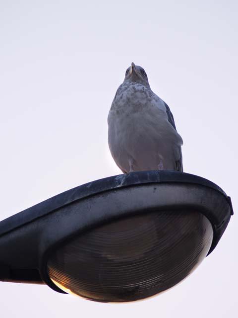 「鳥」1_e0096928_336564.jpg