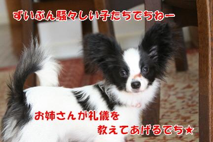 d0013149_0142054.jpg