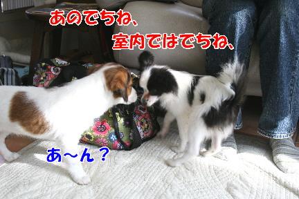 d0013149_0303617.jpg