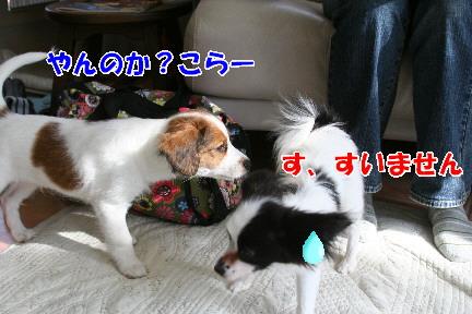 d0013149_0304777.jpg