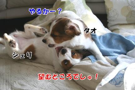 d0013149_03065.jpg