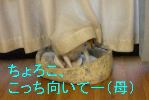 f0053952_20125228.jpg