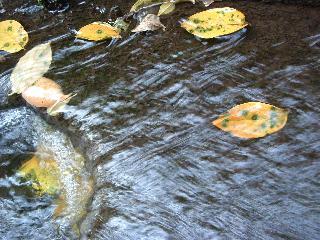 池が凍っても魚が生きられる理由・・・_b0092858_9242579.jpg