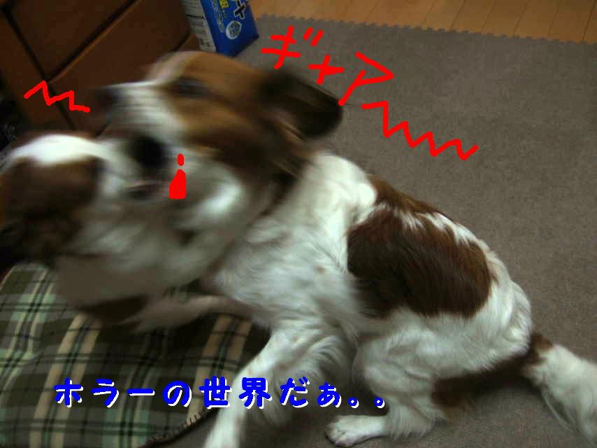 c0075585_1383863.jpg