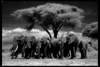 Eye for an Elephant _c0027188_742180.jpg