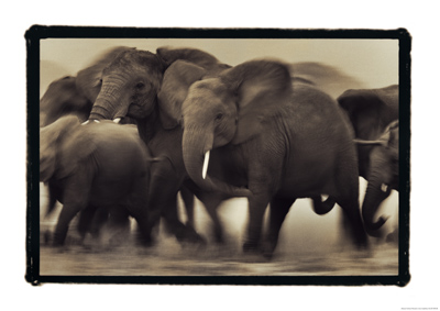 Eye for an Elephant _c0027188_763934.jpg