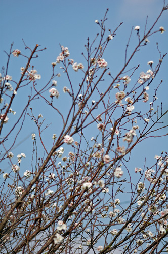 もう春ですか? (・・?) _f0012718_19262237.jpg