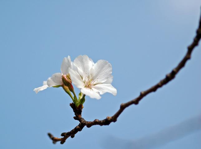もう春ですか? (・・?) _f0012718_19282898.jpg