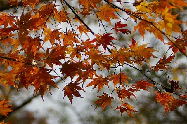 白山の紅葉(2)_d0043136_20131969.jpg