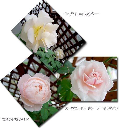 c0097558_011556.jpg
