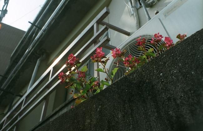 いつでも花を。_d0068664_6415014.jpg