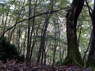10/29峰床山・八丁平_c0024167_745123.jpg