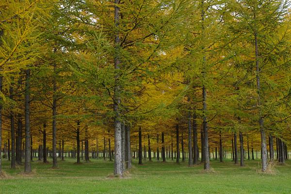 優しい秋の日_e0051186_18244368.jpg