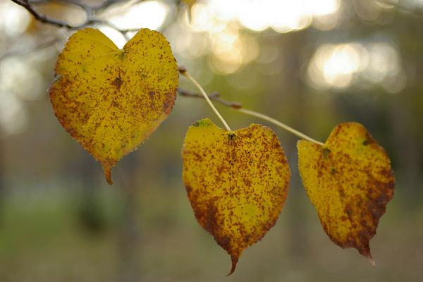 優しい秋の日_e0051186_18251958.jpg