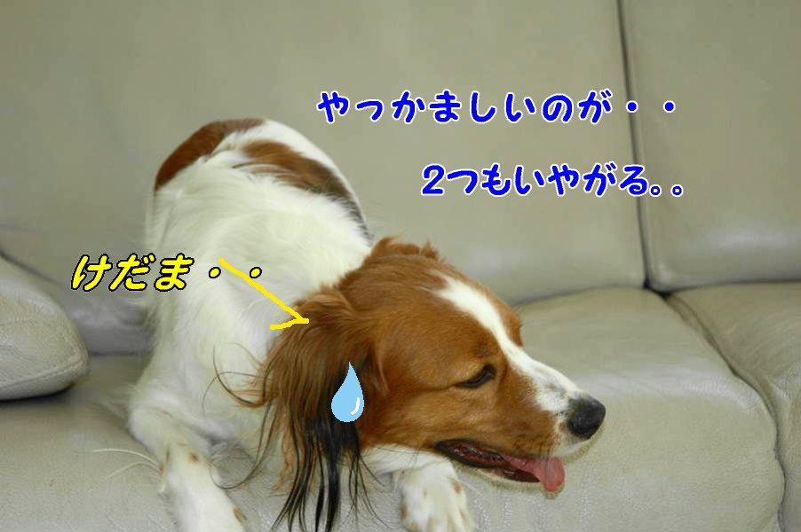 c0075585_004250.jpg
