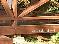 e0100618_15104076.jpg