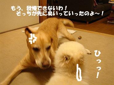 c0087521_1745211.jpg