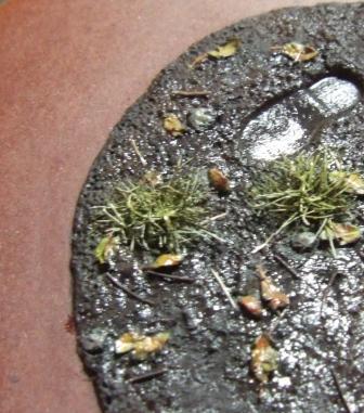 1/35 植物の枯死体・針葉樹落葉・名残雪 : 模型慕情
