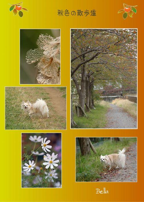 秋の朝_f0012718_0502655.jpg