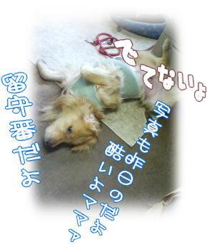 f0109418_1404757.jpg