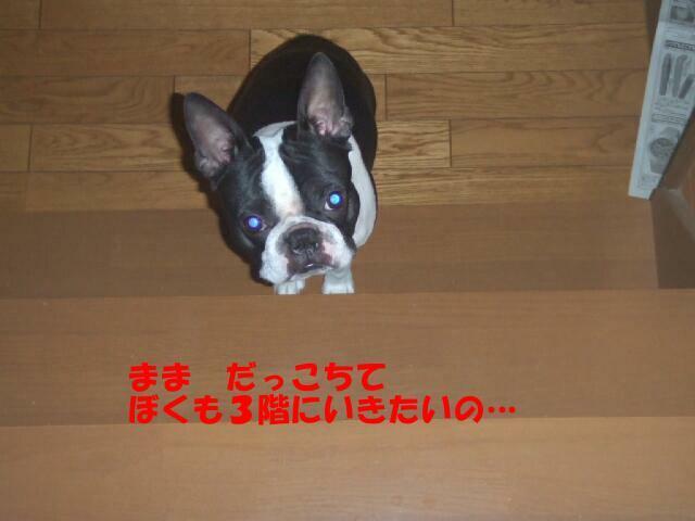 f0059334_9244143.jpg