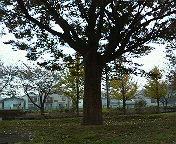 公園の木。_b0011075_1734928.jpg