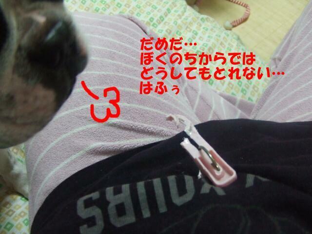 f0059334_856363.jpg