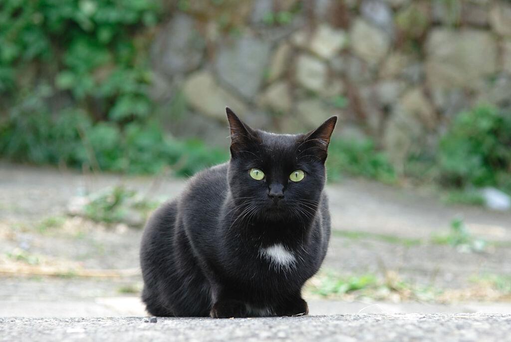 のんびり猫 3_b0080944_20445940.jpg