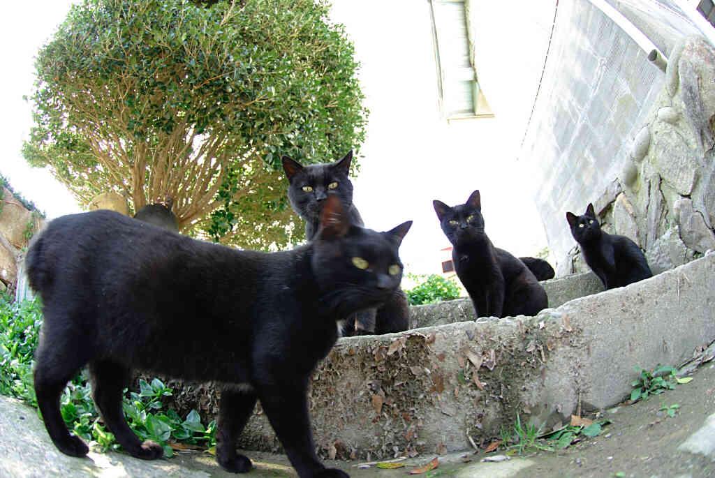 のんびり猫 3_b0080944_20454575.jpg