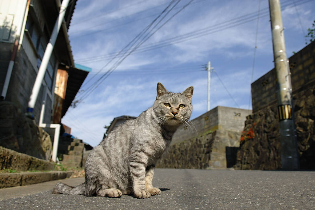 のんびり猫 3_b0080944_2046065.jpg