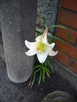 1枚の写真 (青春スケッチ) from のだめ_e0080345_8413210.jpg