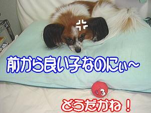 f0011845_0594327.jpg