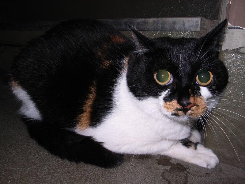 円らな瞳の猫_e0004009_034212.jpg