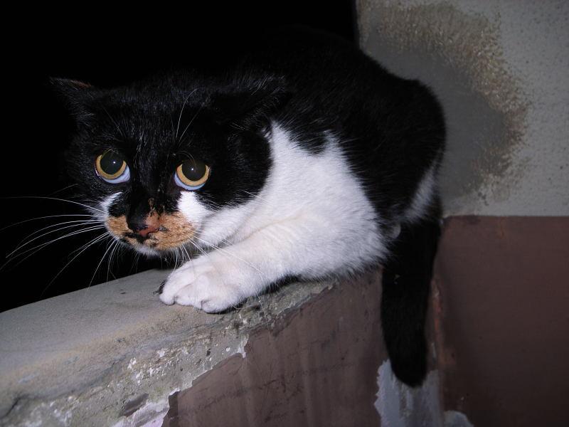 円らな瞳の猫_e0004009_042011.jpg