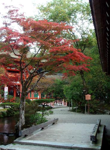 上賀茂神社_e0048413_2133559.jpg