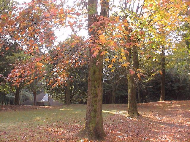 公園の秋。_e0060555_18561683.jpg