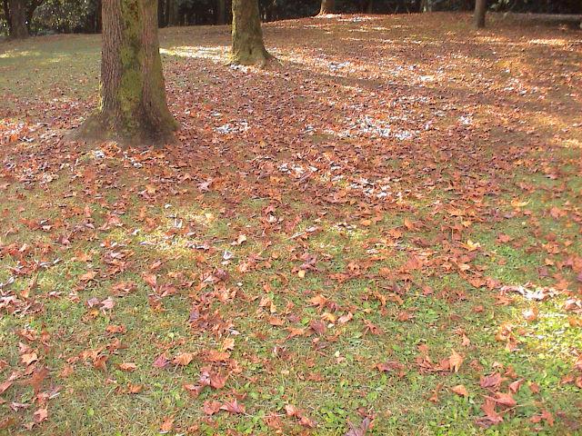 公園の秋。_e0060555_18583347.jpg