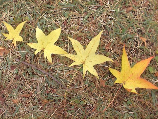 公園の秋。_e0060555_18593921.jpg
