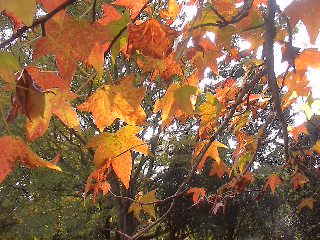 公園の秋。_e0060555_190184.jpg