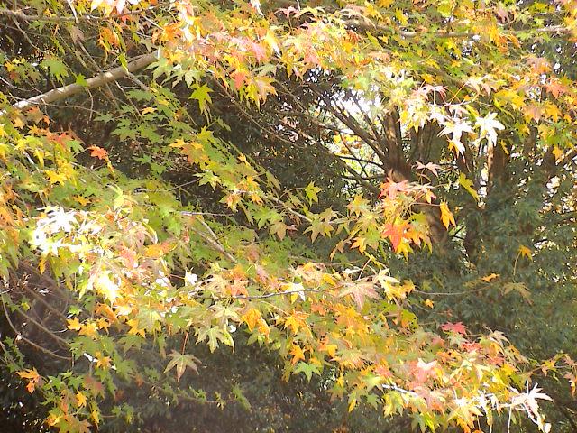 公園の秋。_e0060555_1905669.jpg
