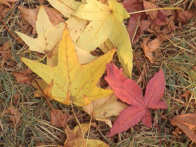 公園の秋。_e0060555_1912219.jpg