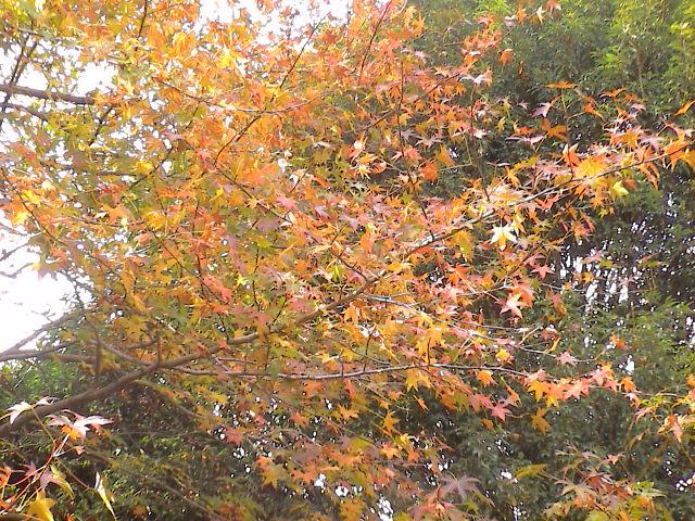 公園の秋。_e0060555_1914956.jpg