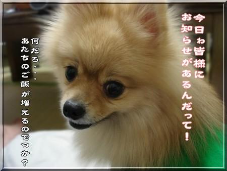b0078073_2237163.jpg