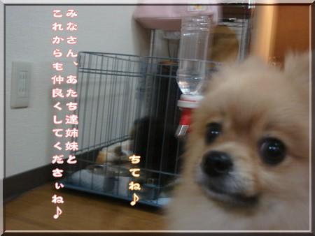 b0078073_2251488.jpg