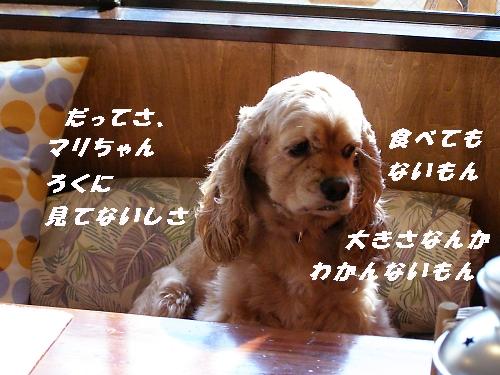 b0067012_14254121.jpg