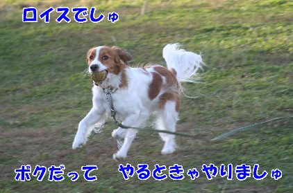 d0013149_13383384.jpg
