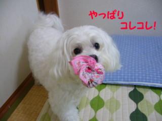 f0005727_1601550.jpg