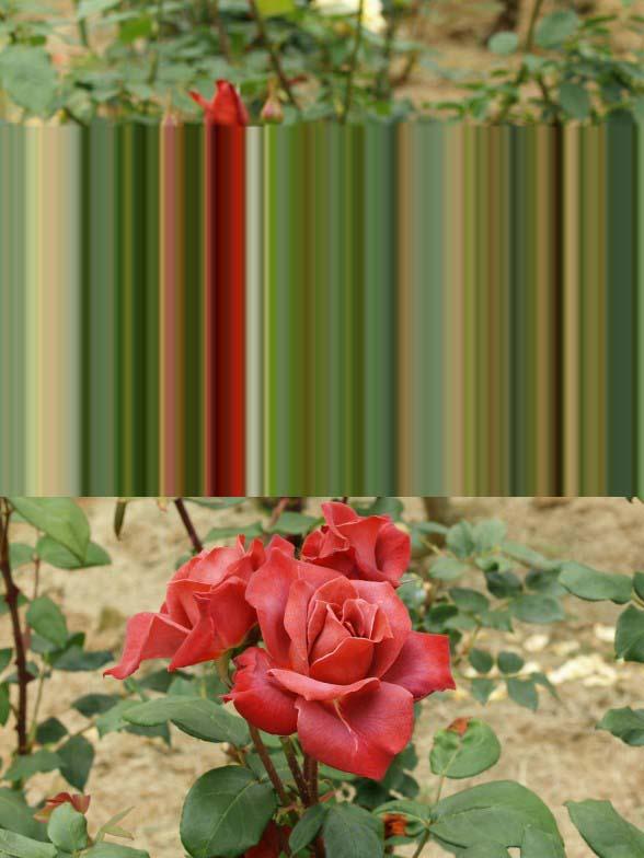 f0103534_1918037.jpg