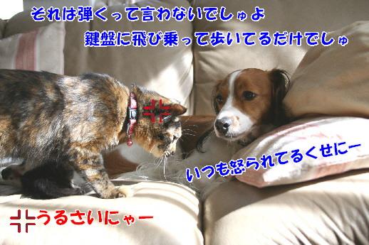 d0013149_22515419.jpg